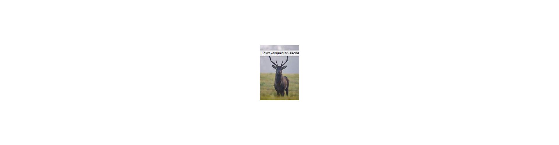 Lokkemiddel krondyr - Køb lokkemidler til jagt på krondyr hos Jagt & Vildt