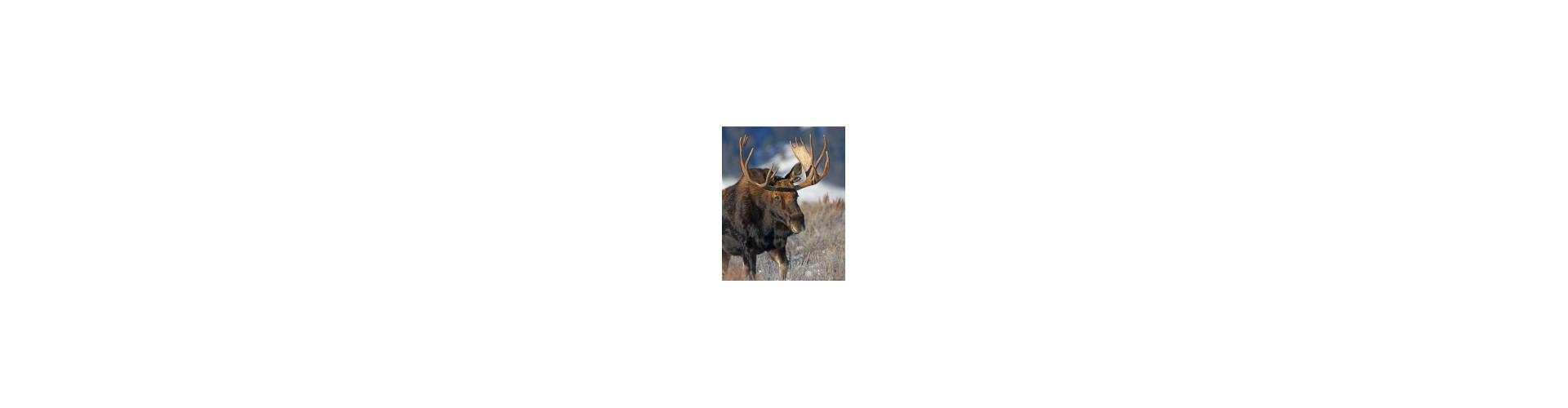 Lokkemiddel elg - Køb elg lokkemidler til gode priser hos os - Hurtig fragt